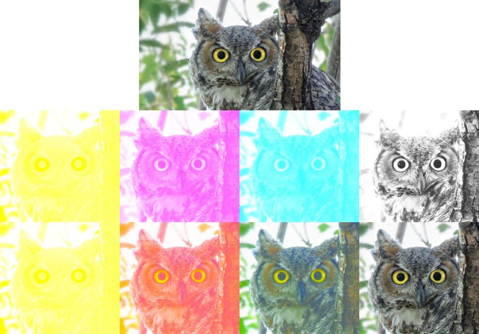 CMYK_Example_owl
